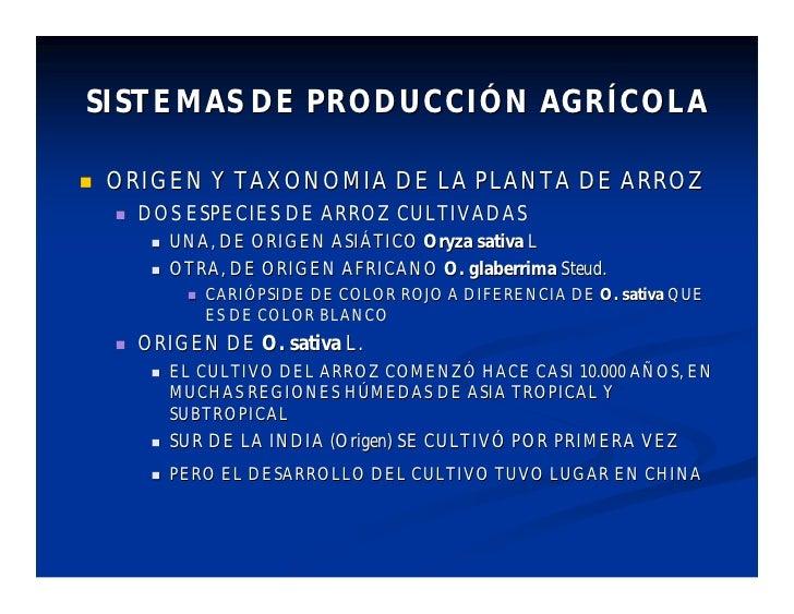 SISTEMAS DE PRODUCCIÓN AGRÍCOLA     ORIGEN Y TAXONOMIA DE LA PLANTA DE ARROZ        DOS ESPECIES DE ARROZ CULTIVADAS    ...