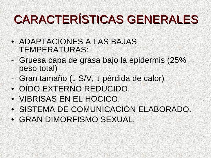 CARACTERÍSTICAS GENERALES <ul><li>ADAPTACIONES A LAS BAJAS TEMPERATURAS: </li></ul><ul><li>Gruesa capa de grasa bajo la ep...
