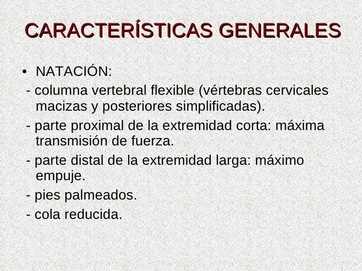 CARACTERÍSTICAS GENERALES <ul><li>NATACIÓN: </li></ul><ul><li>- columna vertebral flexible (vértebras cervicales macizas y...