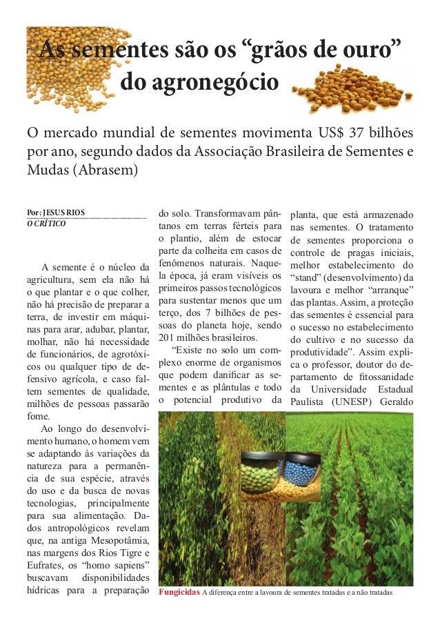 """As sementes são os """"grãos de ouro"""" do agronegócio O mercado mundial de sementes movimenta US$ 37 bilhões por ano, segundo ..."""