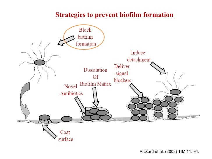 biofilms essay You may not be familiar with the term biofilm, but it is something that you come  into contact with every day the plaque that forms on your teeth and causes tooth .