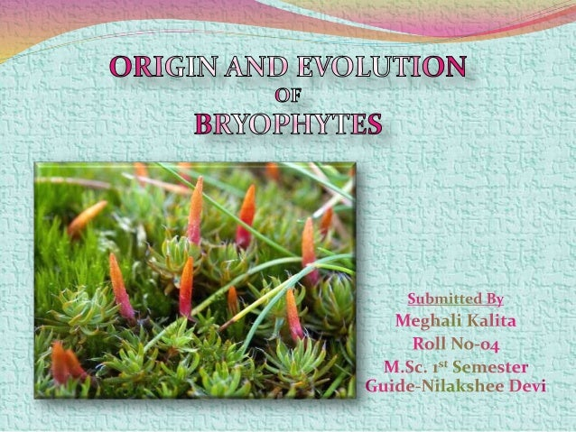 Bryophytes are small, non vascular land plants, that require water for reproduction. The defining features of bryophytes a...