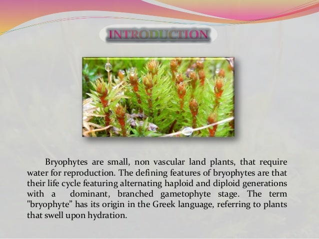 Origin and evolution of bryophytes Slide 2