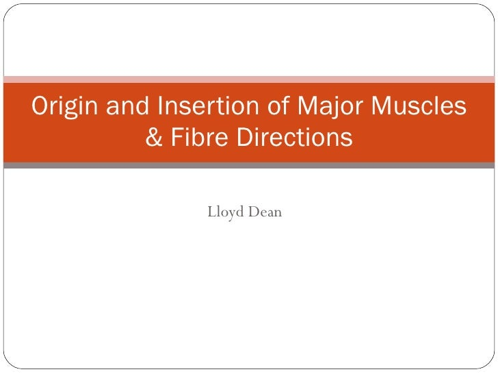 Lloyd Dean Origin and Insertion of Major Muscles & Fibre Directions