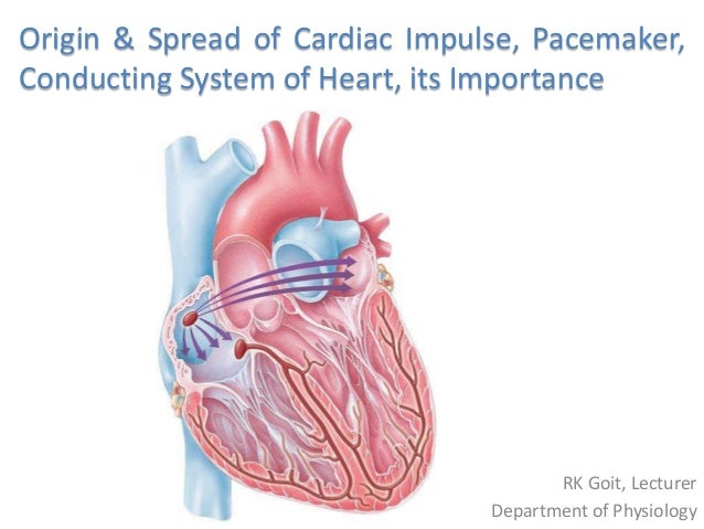Origin of the Heart
