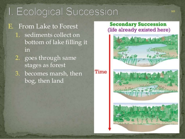 10  E. From Lake to Forest  1. sediments collect on  bottom of lake filling it  in  2. goes through same  stages as forest...