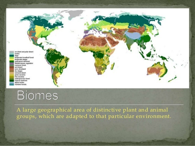 12  A large geographical area of distinctive plant and animal  groups, which are adapted to that particular environment.