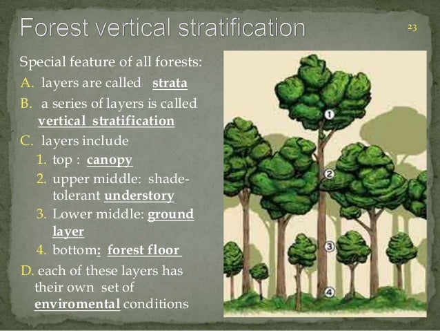 23  Special feature of all forests:  A. layers are called strata  B. a series of layers is called  vertical stratification...