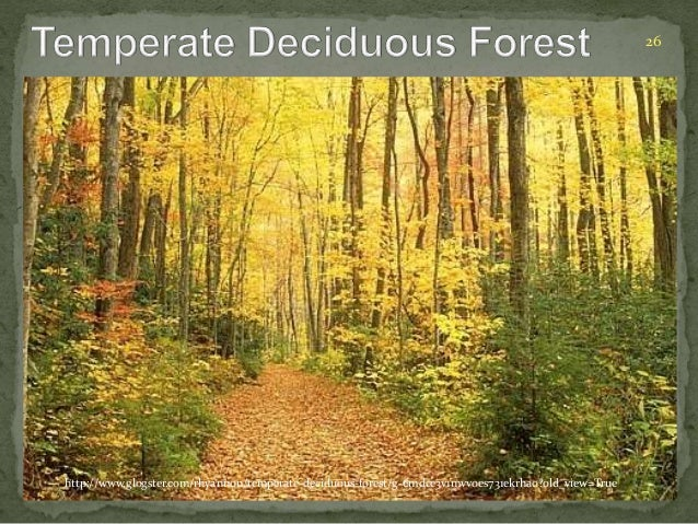26  http://www.glogster.com/rhyannon/temperate-deciduous-forest/g-6mdce3v1mvv0es731ekrha0?old_view=True
