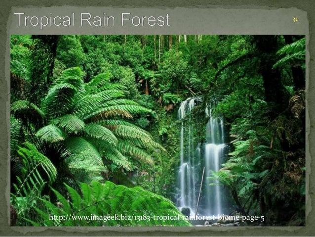 31  http://www.imageek.biz/13183-tropical-rainforest-biome-page-5