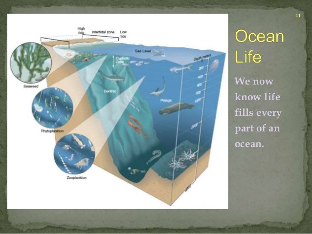 We now  know life  fills every  part of an  ocean.  11
