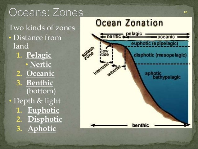 12  Two kinds of zones  • Distance from  land  1. Pelagic  • Nertic  2. Oceanic  3. Benthic  (bottom)  • Depth & light  1....