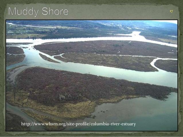 17  http://www.whsrn.org/site-profile/columbia-river-estuary