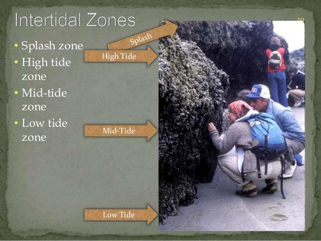 20  • Splash zone  • High tide  zone  • Mid-tide  zone  • Low tide  zone  High Tide  Mid-Tide  Low Tide