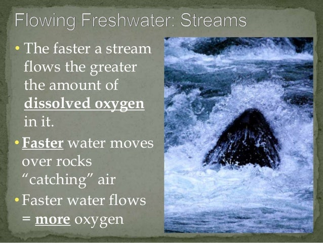 """• The faster a stream  flows the greater  the amount of  dissolved oxygen  in it.  • Faster water moves  over rocks  """"catc..."""