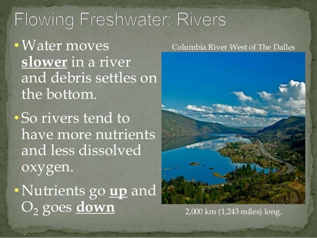 • Water moves  slower in a river  and debris settles on  the bottom.  • So rivers tend to  have more nutrients  and less d...