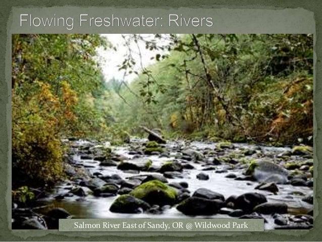 Salmon River East of Sandy, OR @ Wildwood Park