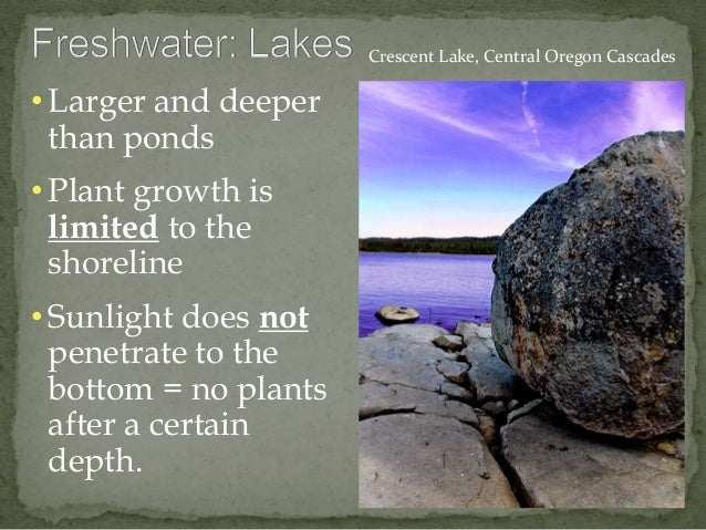 • Larger and deeper  than ponds  • Plant growth is  limited to the  shoreline  • Sunlight does not  penetrate to the  bott...