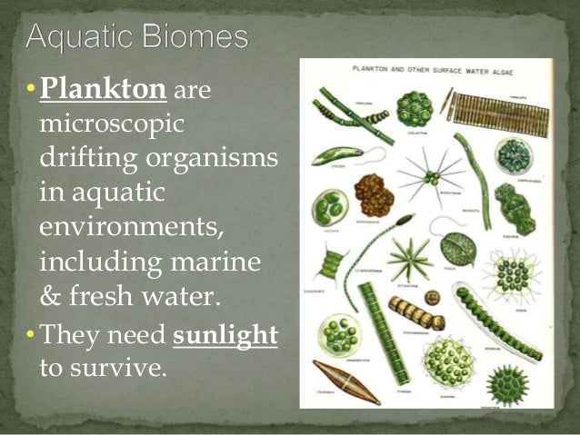 • Plankton are  microscopic  drifting organisms  in aquatic  environments,  including marine  & fresh water.  • They need ...