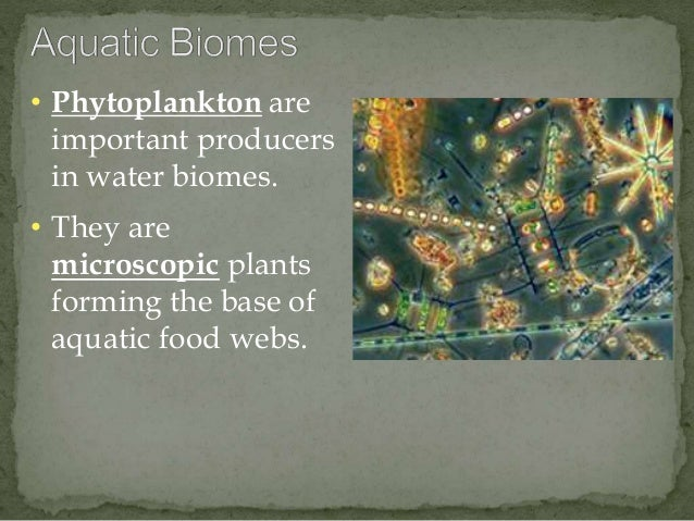 • Phytoplankton are  important producers  in water biomes.  • They are  microscopic plants  forming the base of  aquatic f...