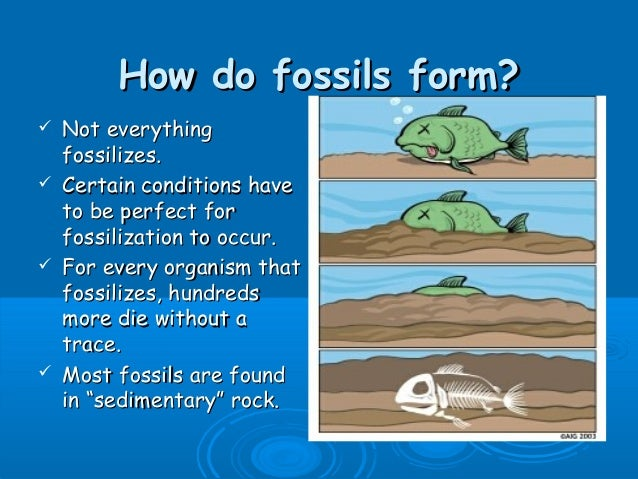 Hookup fossils and rocks mike riddle