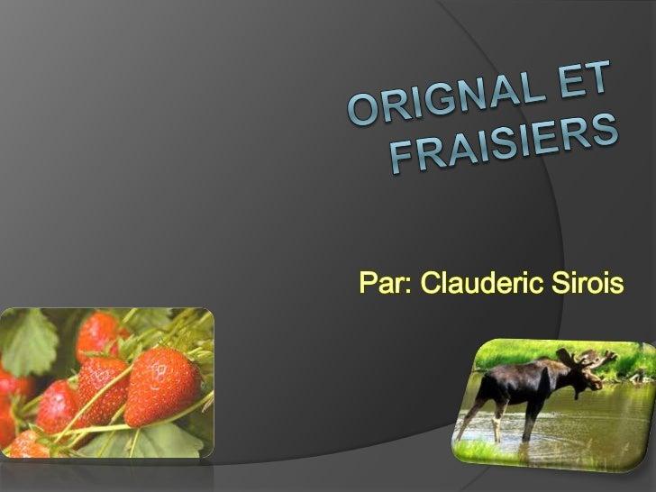 Orignal et fraisiers<br />Par: Clauderic Sirois<br />