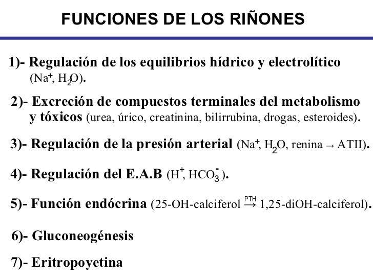 FUNCIONES DE LOS RIÑONES1)- Regulación de los equilibrios hídrico y electrolítico   (Na+, H2O).2)- Excreción de compuestos...