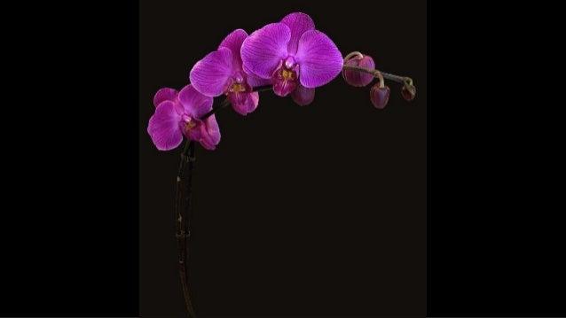 Orkideler, Orchids