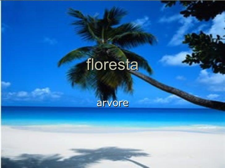 floresta arvore