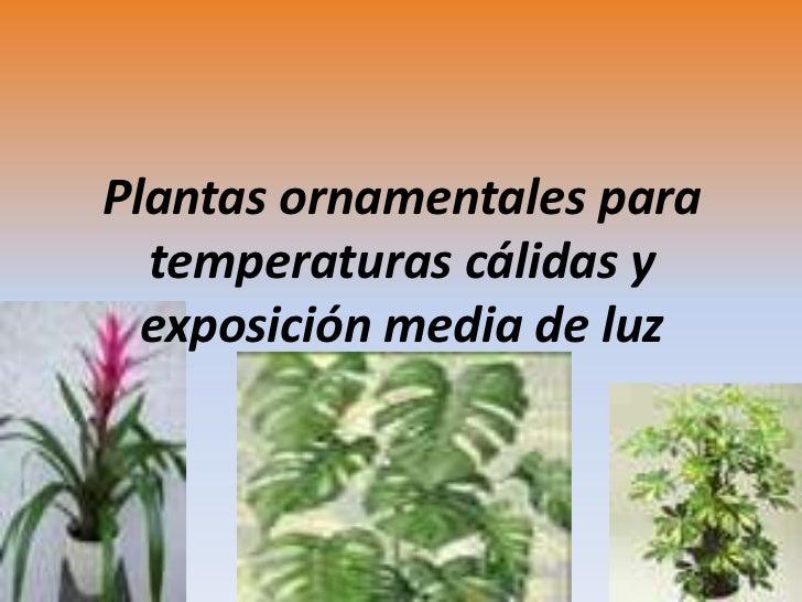 Ornamentales for 20 plantas ornamentales