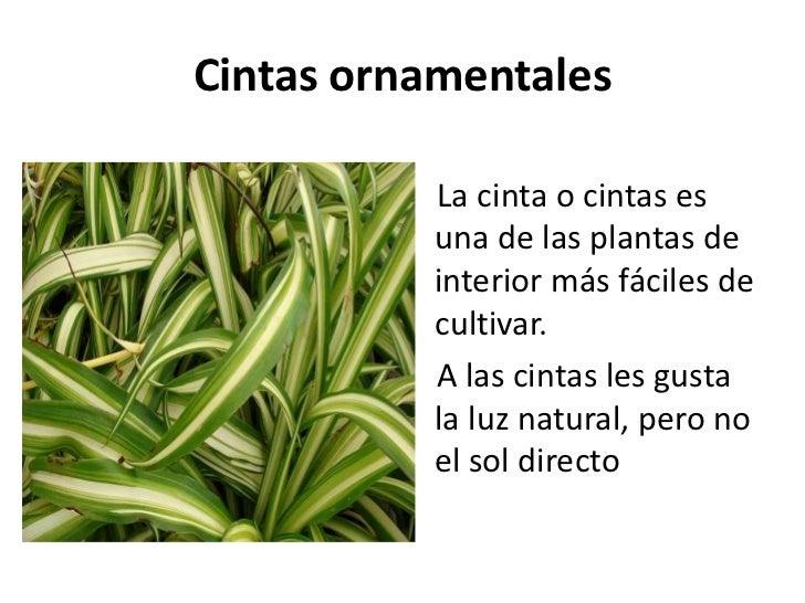 Ornamentales for Informacion de plantas ornamentales