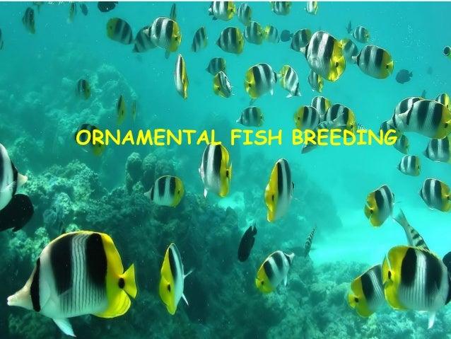 Ornamental fish breeding