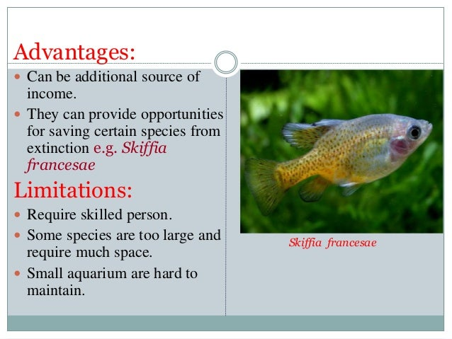 Ornamental fishes and maintainance of aquculture by irfan for Ornamental fish