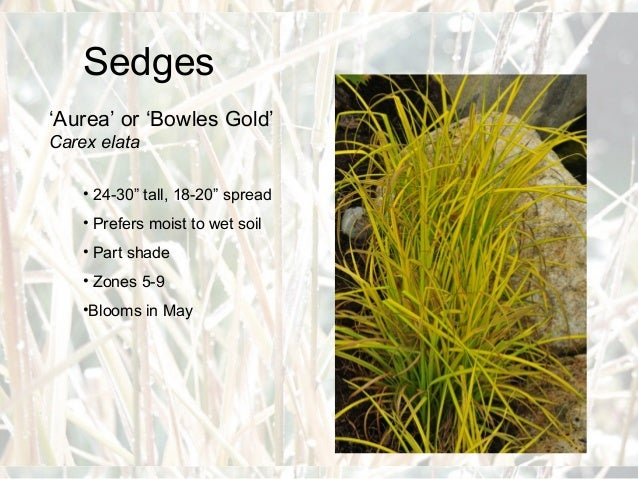 Zone 3 Ornamental Grasses Ornamental grasses for master gardeners 18 workwithnaturefo