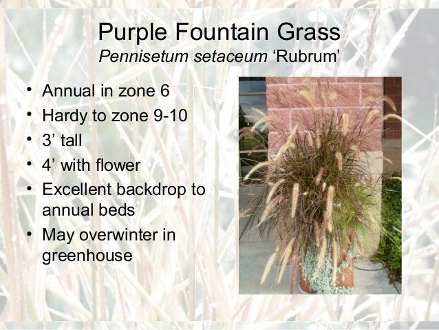 Zone 3 Ornamental Grasses Ornamental grasses for master gardeners big bluestem andropogon gerardii turkey foot workwithnaturefo