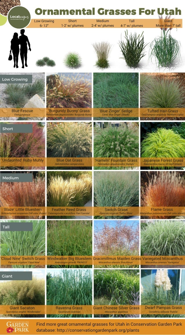 Ornamental grasses for utah Conservation Garden Park