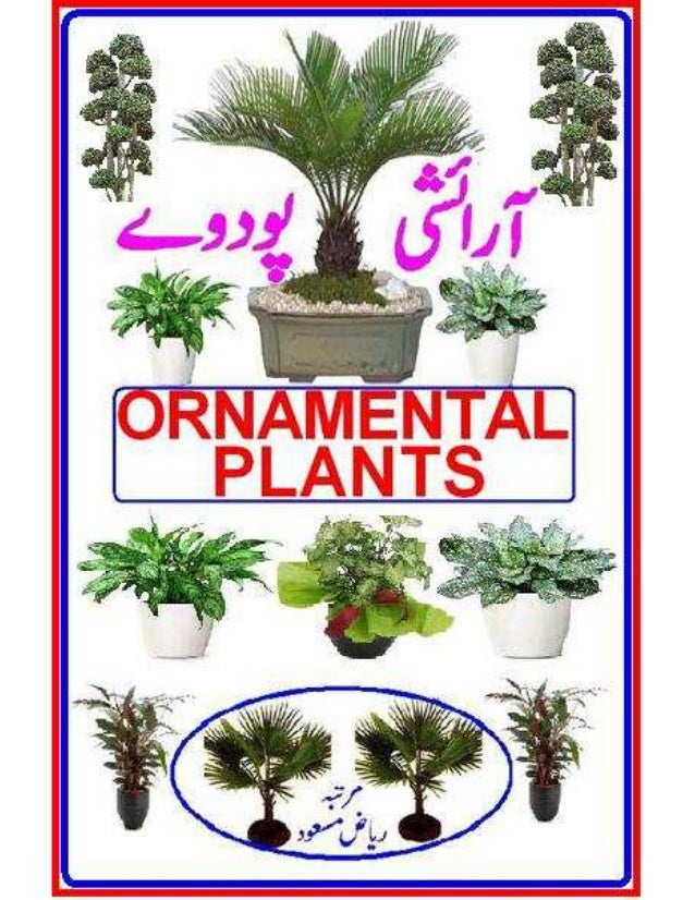 Ornamental Plant Urdu