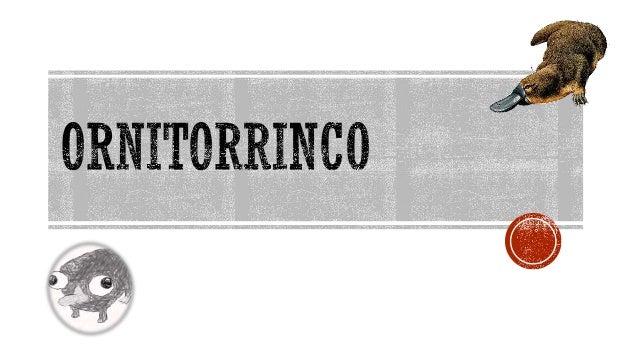  Neste trabalho eu irei falar sobre a espécie ornitorrinco, que está em extinção, irei dizer as causas da sua extinção, a...