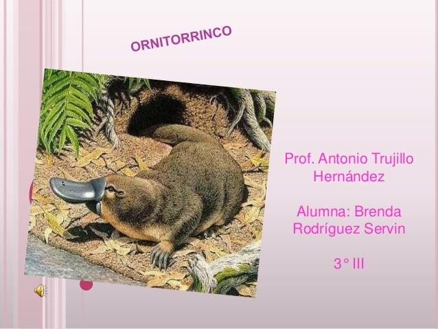 Prof. Antonio Trujillo     Hernández Alumna: Brenda Rodríguez Servin        3° III