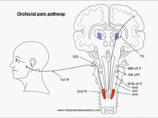 DENTAL PAIN PATHWAY EPUB