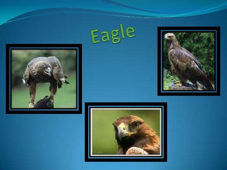 Eagle<br />