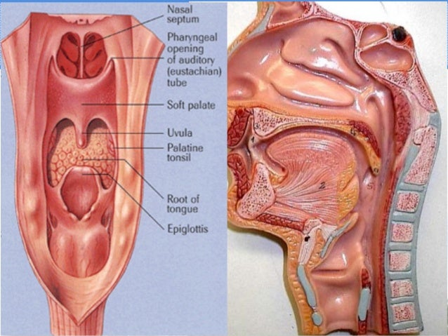 Oropharynx cancer practical target delineation 2013 apr