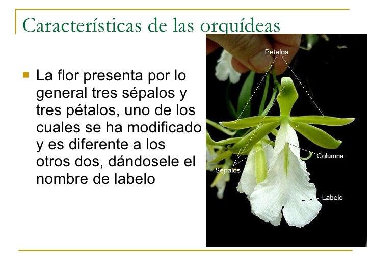 14. Características de las orquídeas