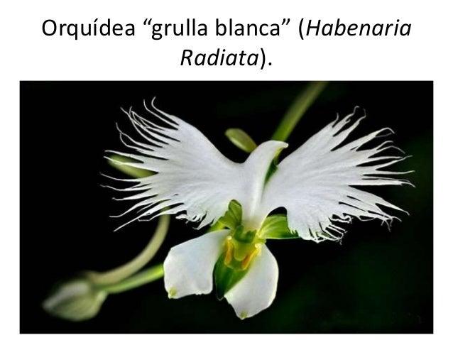 Orquídeas Que Parecen Otra Cosa