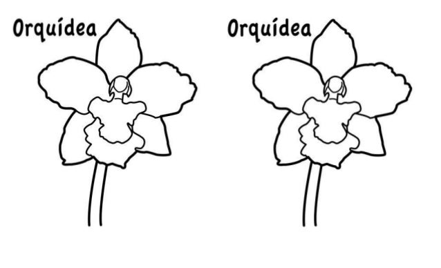 Orquidea para colorear