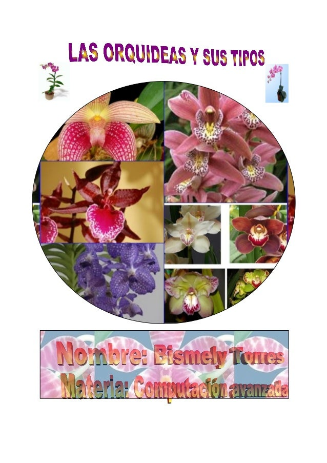 LAS ORQUIDEAS Y SUS TIPOS LAS ORQUIDEAS Las Orquídeas son unas plantas fascinantes. Sus flores poseen formas extrañísimas ...