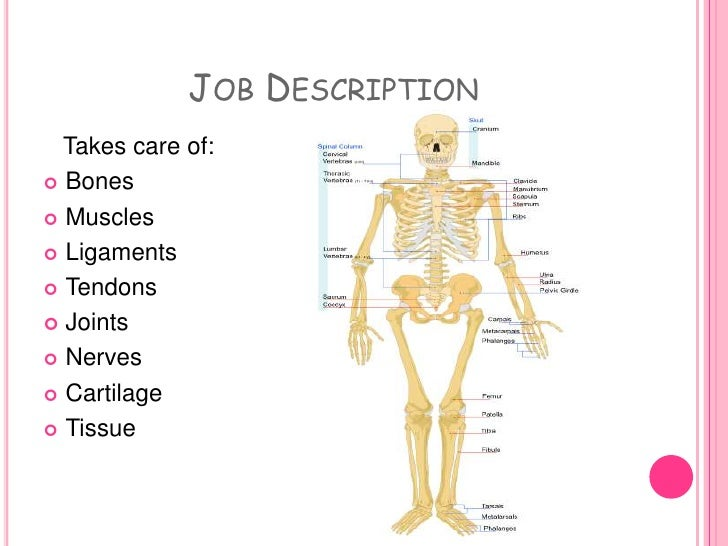 job description - Orthopedic Doctor Job Description