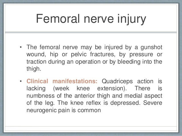 femoral nerve traction – citybeauty, Muscles