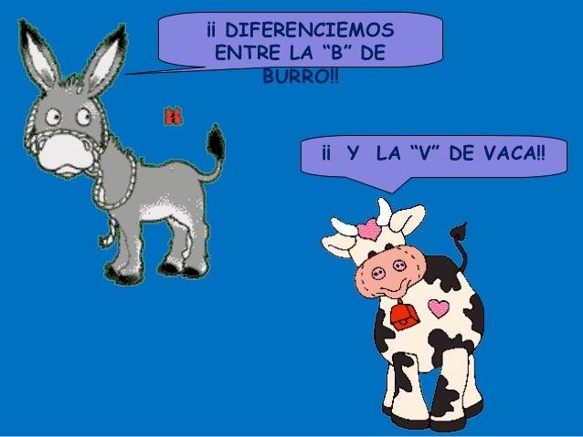 """¡¡ DIFERENCIEMOS  ENTRE LA """"B"""" DE      BURRO!!          ¡¡ Y LA """"V"""" DE VACA!!"""