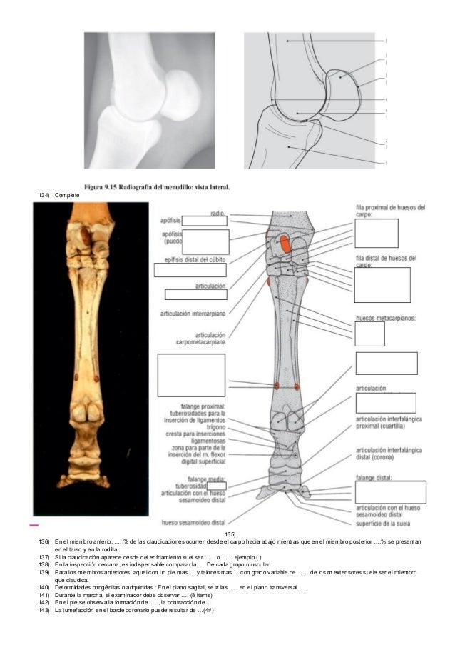Excepcional Anatomía Del Pie Canina Composición - Anatomía y ...